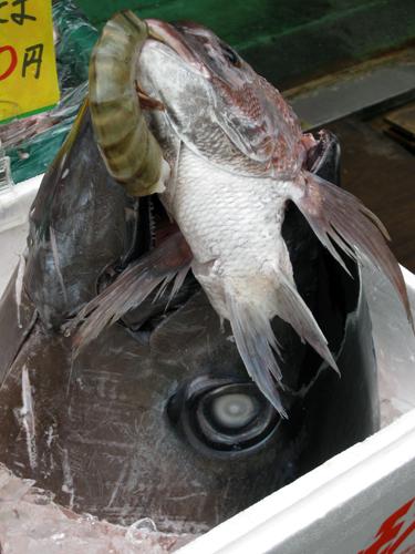 tokyo-tsukiji fish