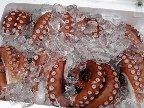 tokyo-tsukiji squid