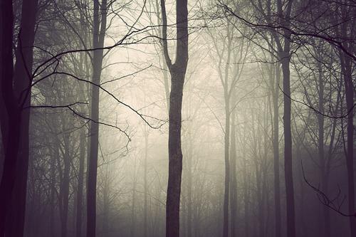 kim holtermand-the trees